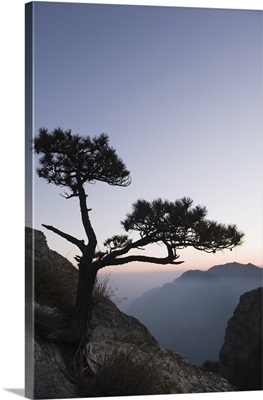 Pine tree silhouetted at dusk on Lushan mountain, Jiangxi Province, China