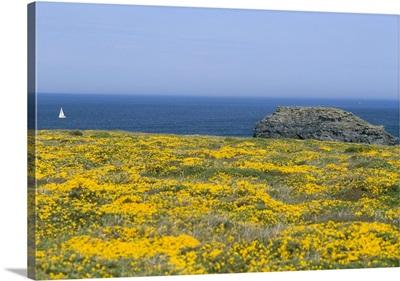 Pointe du Vieux Chateau, Breton Islands, Brittany, France