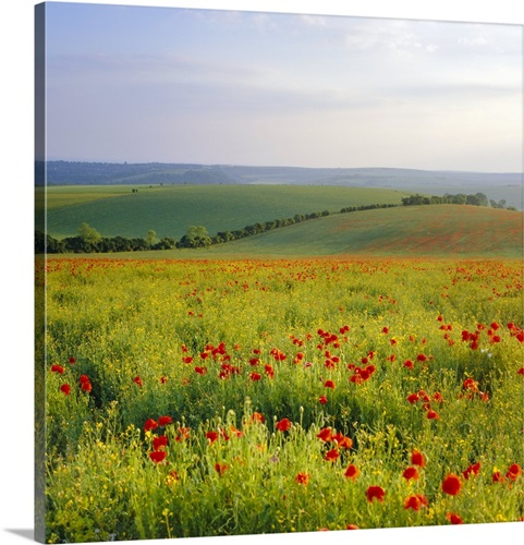 Poppies in Sussex felted wool and embroidery art framed South Downs landscape mixed media picture