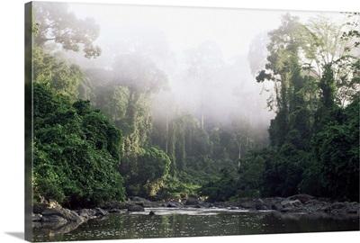 Rainforest, Danum Valley, Sabah, Malaysia, island of Borneo, Southeast Asia