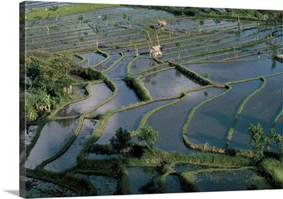 Rice terraces, Tenganan area, island of Bali, Indonesia, Southeast Asia, Asia