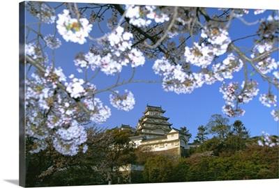 Spring blossom and Himeji Castle Himeji, west Honshu, Japan, Asia