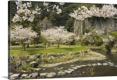 Spring cherry blossoms, Kagoshima prefecture, Kyushu, Japan