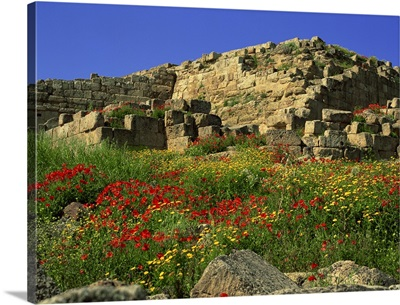 Spring flowers in front of the massive walls of the Acropolis, Selinunte, Sicily, Italy