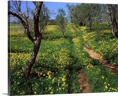 Spring flowers, Sao Jao, Baroa, Algarve, Portugal, Europe