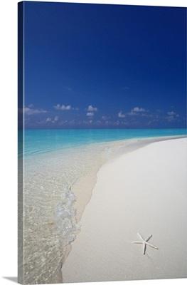 Starfish On Beach, Male Atoll, Maldives, Indian Ocean
