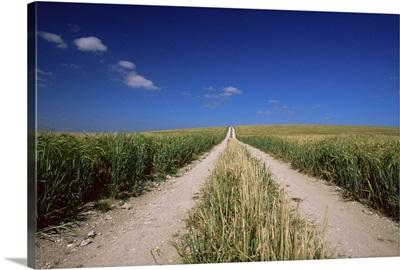 Straight path through field, Hampshire, England, UK