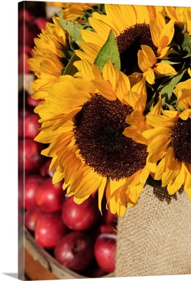 Sunflowers and apples, The Hamptons, Long Island, New York State, USA