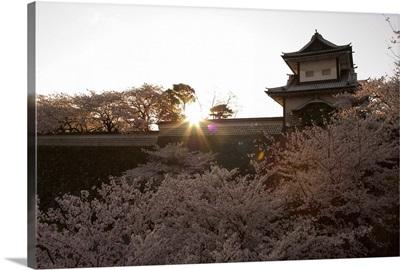 Sunset, cherry blossom, Kanazawa castle, Kanazawa city, Japan