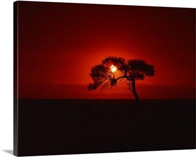 Sunset, Mundi Mundi Plains, New South Wales, Australia