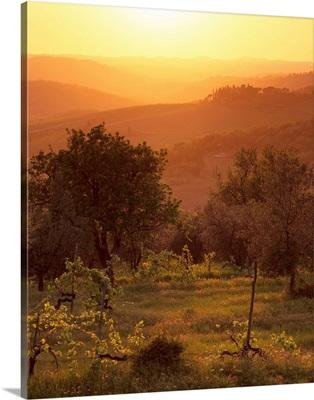 Sunset over vineyards near Panzano in Chianti, Tuscany, Italy