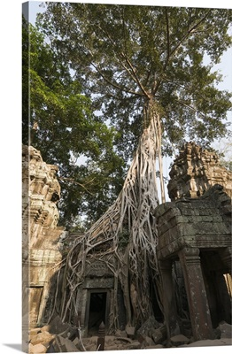 Taprohm Kei temple, Angkor Thom, Siem Reap, Cambodia