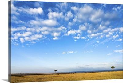 The Bush, Masai Mara National Reserve, Kenya, East Africa, Africa