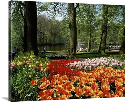 Tulips, Keukenhof Gardens, Lisse, Holland
