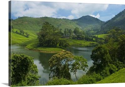 View over Tea Estate, Tamil Nadu, India, Asia