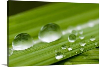 Water droplets on grass, Dali, Yunnan, China, Asia