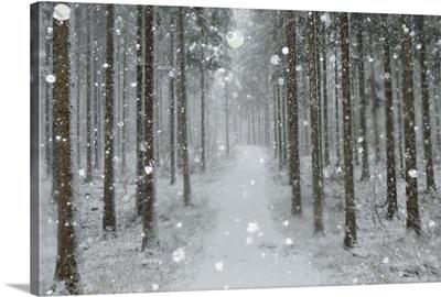 Winter landscape, Black Forest, Baden-Wurttemberg, Germany