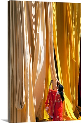 Woman In Sari Checking The Quality Of Freshly Dyed Fabric, Rajasthan, India