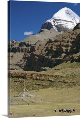 Yak train approaches Tarboche, prayer flag pole in Lha Chu canyon, Tibet, China