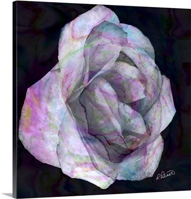 Pink Rose On Dark