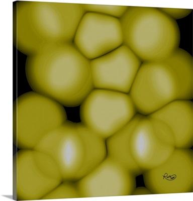 Yellow Kernels