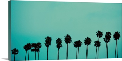 Palms In Color