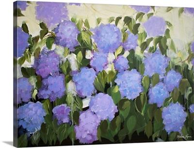 Purple And Blue Hydrangeas