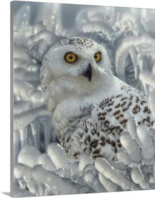 Snowy Owl Sanctuary