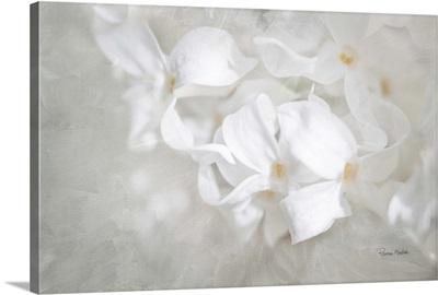 White Lilac I