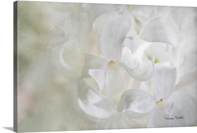 White Lilac II
