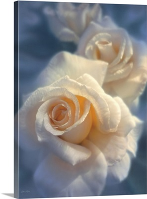 White Roses - Unforgettable