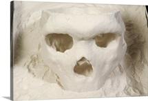 3D cast of hominid skull