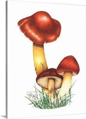 Crimson waxcap mushrooms, artwork