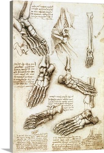 Foot Anatomy By Leonardo Da Vinci Wall Art Canvas Prints Framed