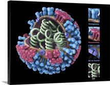 Influenza virus structure, 3D artwork