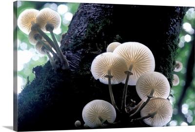 Porcelain mushrooms