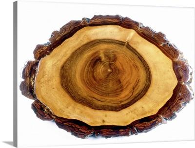 Walnut tree trunk