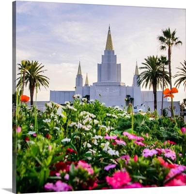 Oakland California Temple Flowers, Oakland, California