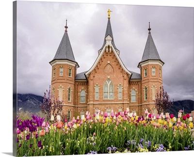 Provo City Center Temple, Springtime Tulips, Provo, Utah