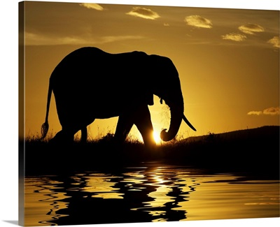 African elephant in silhouette at sunrise, Kenya, Africa