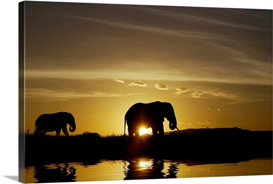 African Elephant Sunset