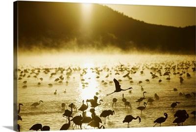 African Flamingos Take Flight