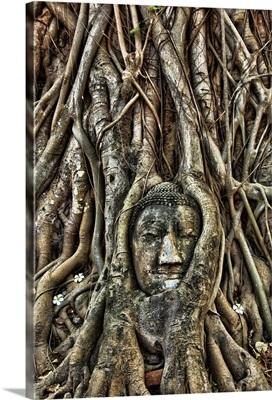 Buddha head inside of a Bodhi tree near Wat Mahathat, Thailand