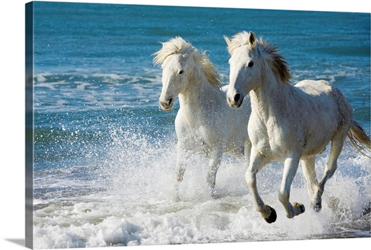Camargue horses running on the beach south of france france wall camargue horses running on the beach south of france france sciox Images
