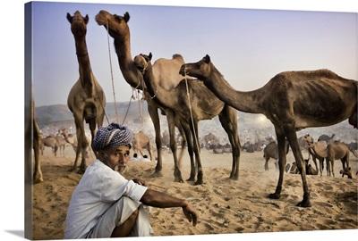 Camel trader at the Pushkar camel festival, Pushkar, India