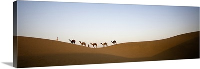 Camels and men in the desert of India