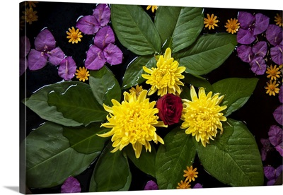 Colorful flowers in water in Mandalay, Burma
