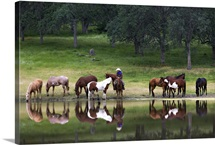 Cowboy and Western Horses by lake, near Yosemite, California