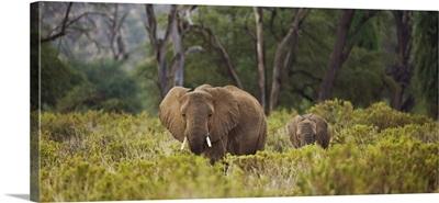 Elephant and baby in Lake Nukuru, Kenya