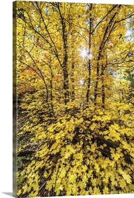 Fall color in Sedona, Arizona